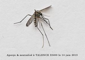 pr sence moustique tigre non confirm e pr s de bordeaux talence 33400 juin 2013 moustique. Black Bedroom Furniture Sets. Home Design Ideas