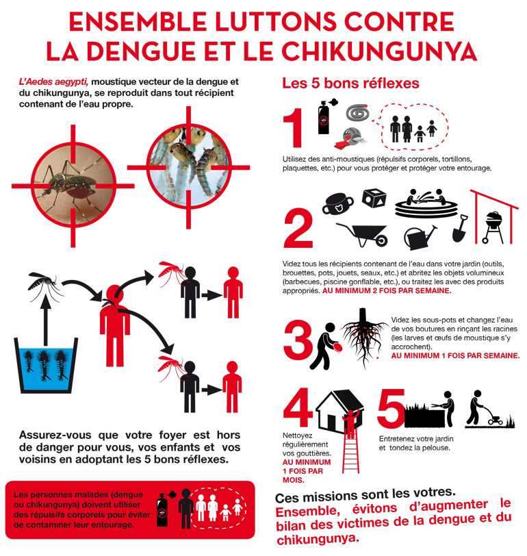 http://moustique-tigre.info/wp-content/uploads/2013/12/chikungunya-aedes-aegypti.jpg
