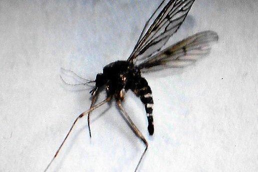 moustique tigre perpignan