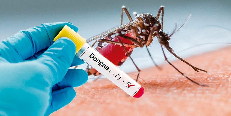 dengue france