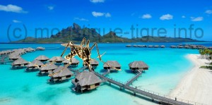 moustique tigre polynesie