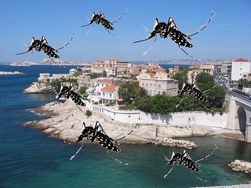 moustique tigre marseille